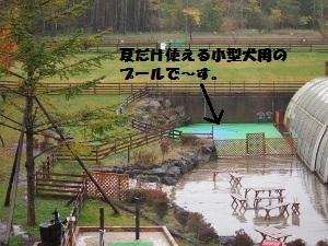 ①雨天のドッグランⅠ.jpg