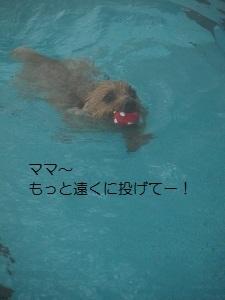 ②ディオン2.jpg