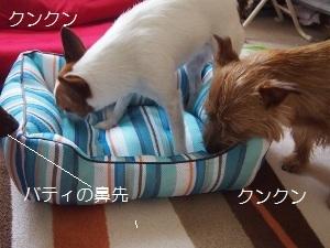 ②ベッド2.jpg