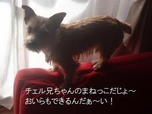 ③ディオン1.jpg