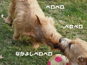③ディオンⅡ.jpg