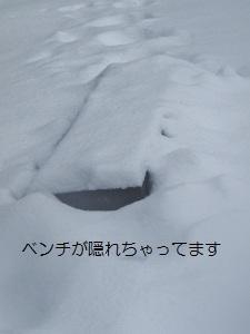 ③ワフ3.jpg