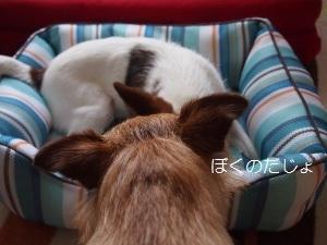 ④チェルシー&ディオン1.jpg