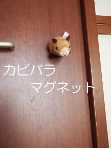 ⑤カピバラ.jpg