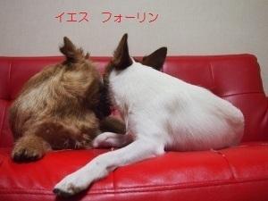 ⑤チェルシー&ディオン5.jpg