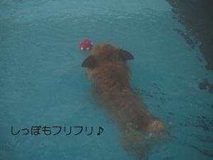 ⑤ディオン3.jpg