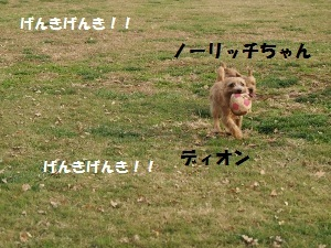 ⑤ディオンⅢ.jpg