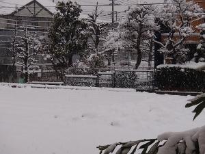 ⑤雪1.jpg