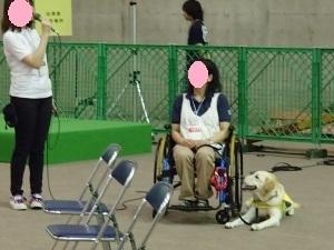 ⑦介護犬.jpg