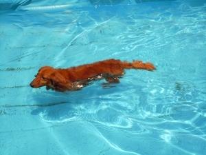 ⑨バティ泳ぎ.jpg