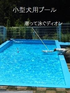 ⑫小型犬用プール.jpg
