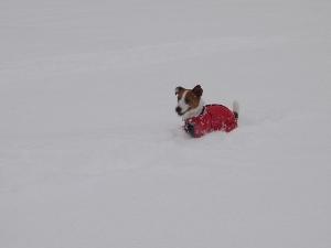 ⑫雪1.jpg