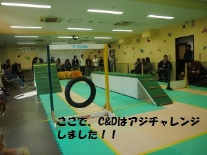 ⑬アジリティ体験会.jpg