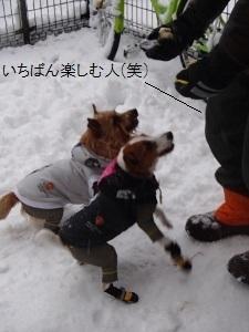⑮チェルシー&ディオン3.jpg