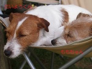 ⑯お友達11.jpg