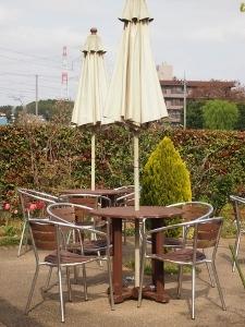 ⑯樹杏4.jpg