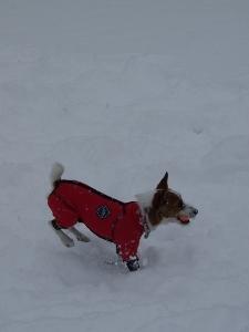 ⑯雪5.jpg