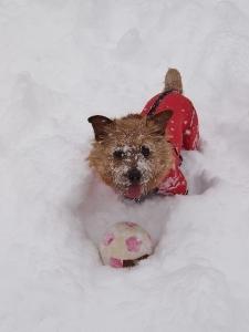 ⑰雪6.jpg