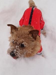 ⑱雪7.jpg