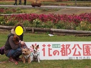 ⑲花の都公園Ⅰ.jpg