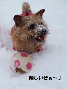 ⑲雪8.jpg