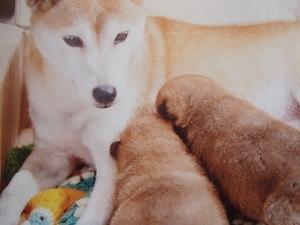 ひまわりと子犬②.jpg