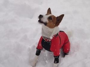 ㉒雪11.jpg