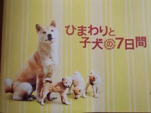 ひまわりと子犬①.jpg